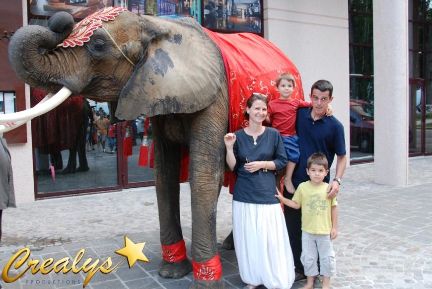 evenementiel lphants et animaux - Location De Chameau Pour Mariage